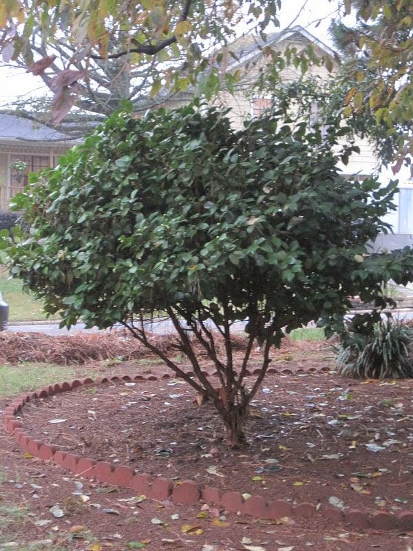 Bush-Tree