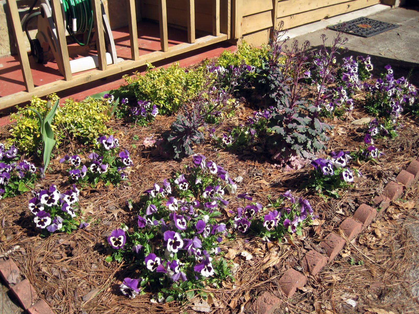 More Garden Goodness