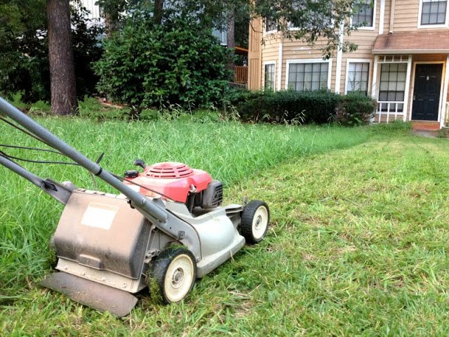 Take a break from mowing the grass for a while after you overseed the lawn.