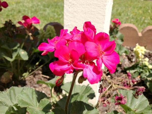 mailbox flowers 1