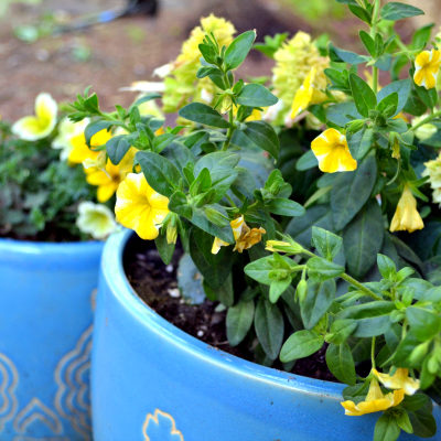 Potted Plans: Taking the Guesswork out of Container Garden Design