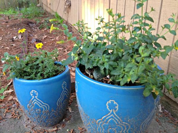 potted plant progress
