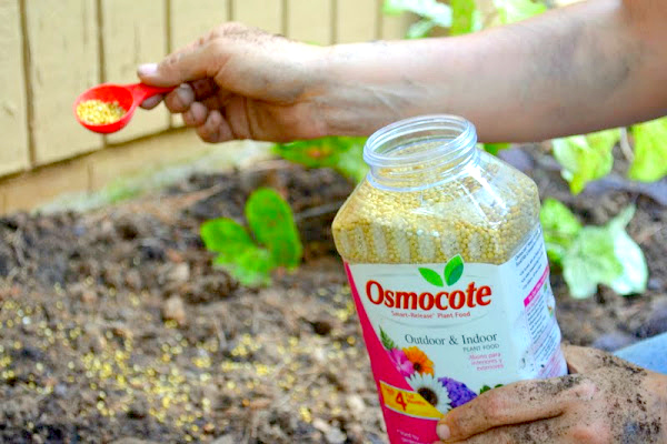 use Osmocote for healthy plants