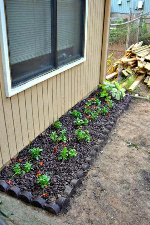 fall planting - backyard makeover