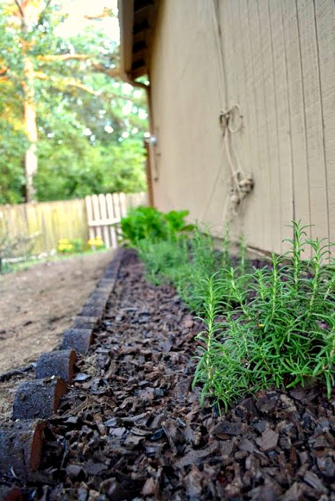rosemary and rubber mulch