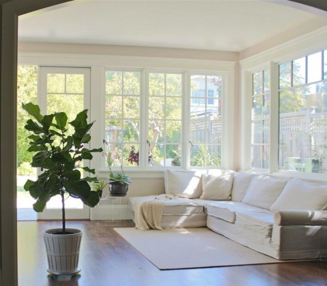 fiddle leaf fig family room