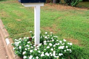 mailbox vinca
