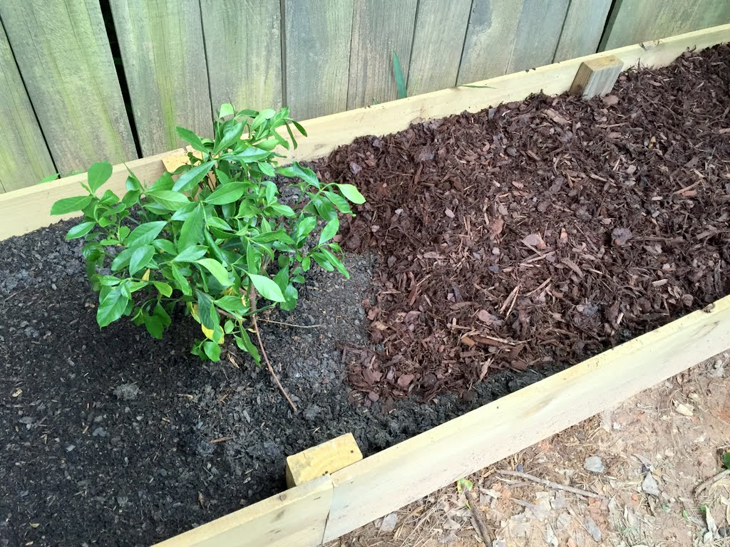 lasagna gardening layering a raised garden bed