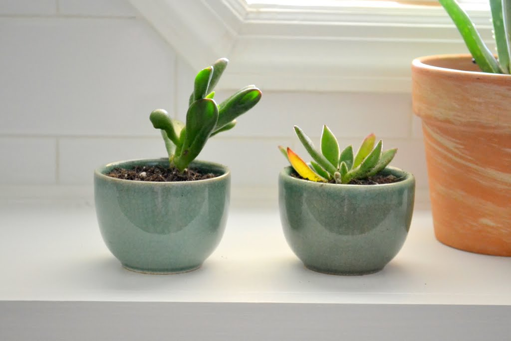 Easy Pot Succulents A Trick For Tiny Containers