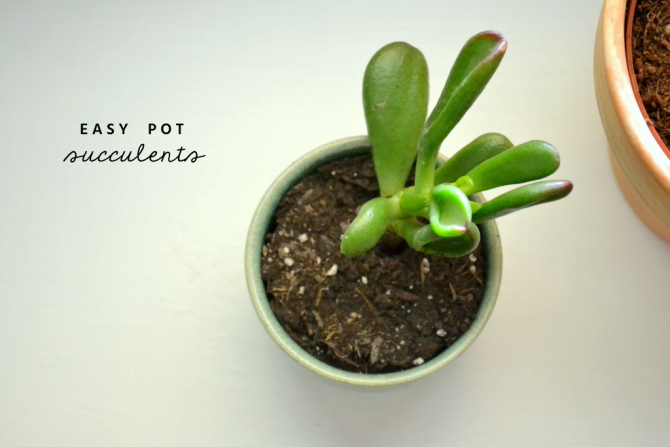 easy pot succulents