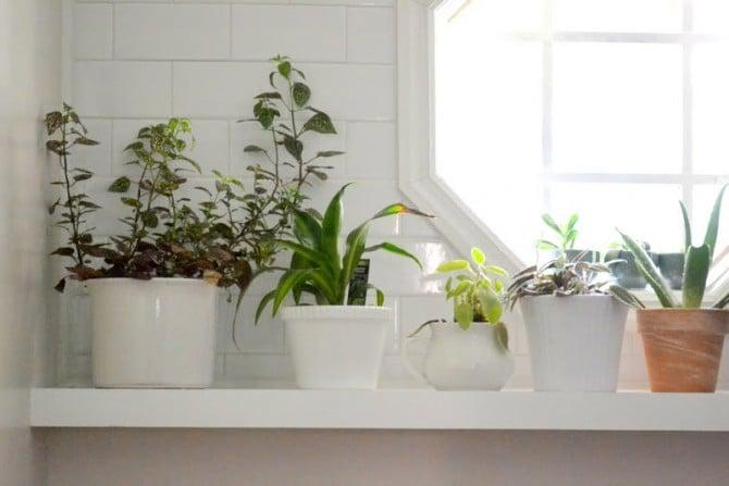 sunny plant shelf - laundry room