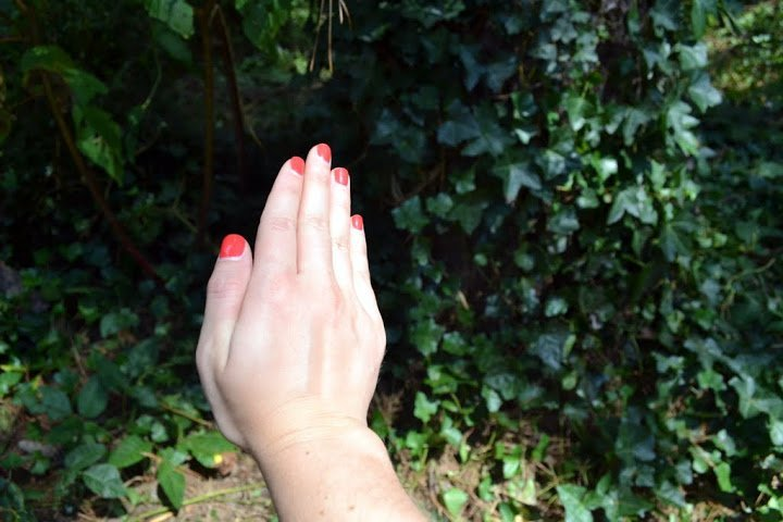 How to Identify Poison Ivy, Prevent Exposure, & Treatment Tips