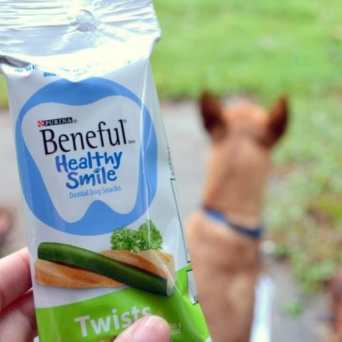 beneful dog snacks giveaway