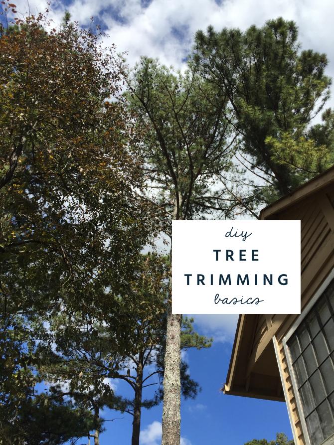 diy tree trimming pruning basics