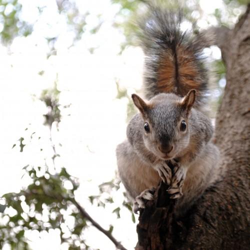 Squirrels are Assholes.