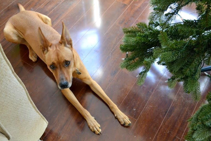 A New Tree, A Little Cleaning, & Charlie