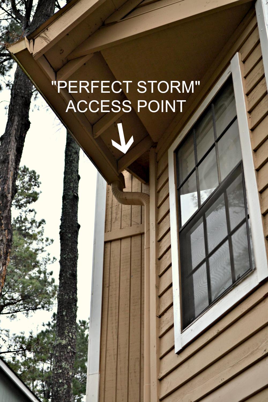 attic squirrel access point