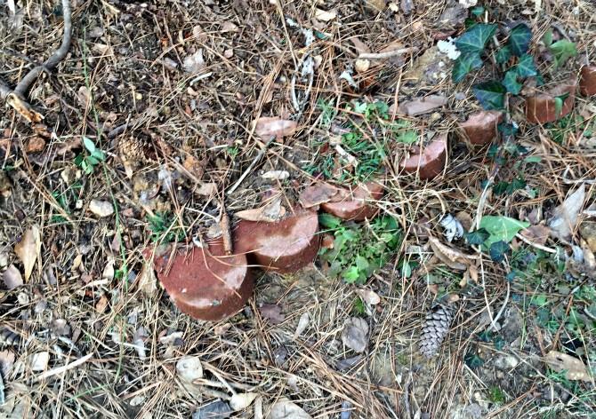 buried stone edging