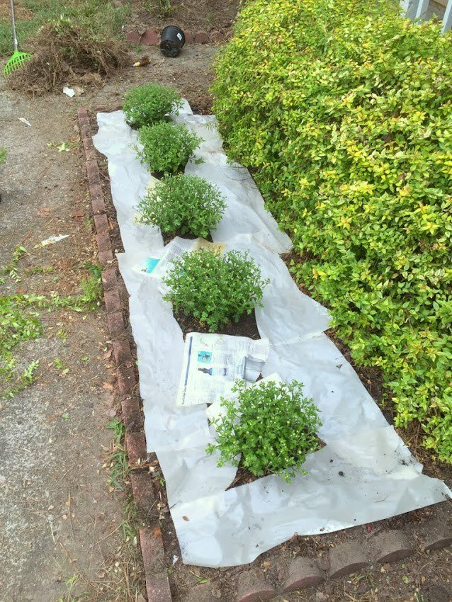 How To Prevent Weeds With Newspaper And Mulch Ugly
