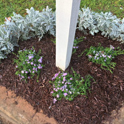 How to Edge a Mailbox Garden Bed + Adding Creeping Phlox