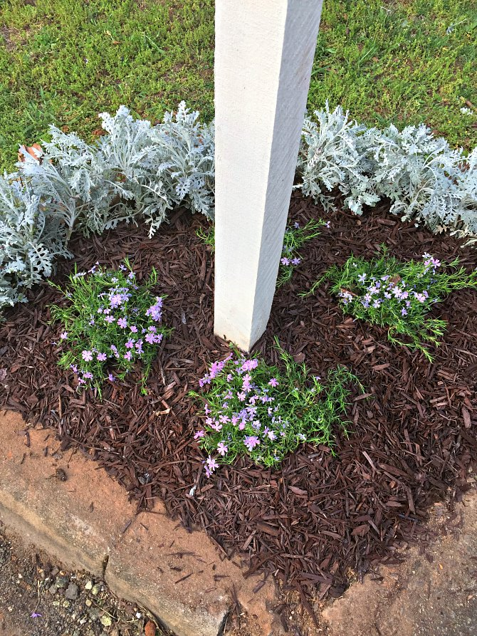 How To Edge A Mailbox Garden Bed Adding Creeping Phlox