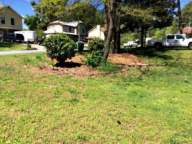 spring lawn no pine straw