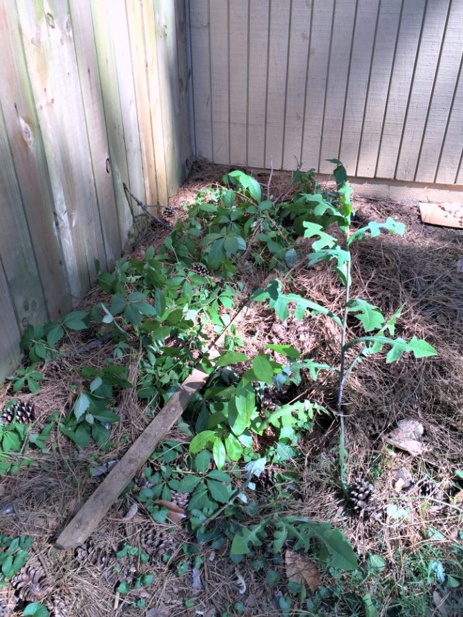 weeds and vines near ac unit