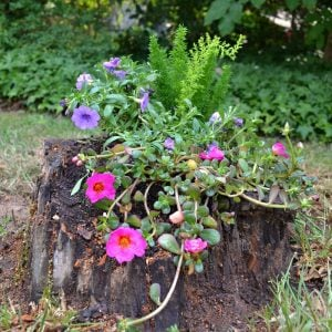 Living DIY Challenge: Cascading Stump Planter