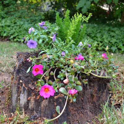 Living DIY Challenge: Cascading Stump Planter