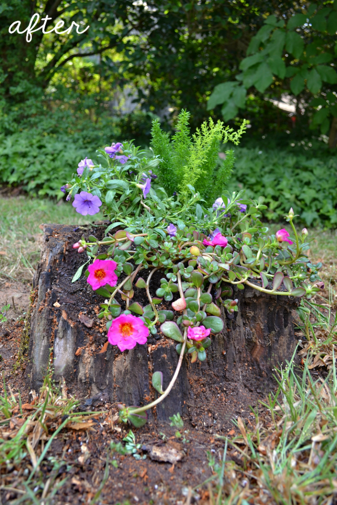 cascading stump planter after