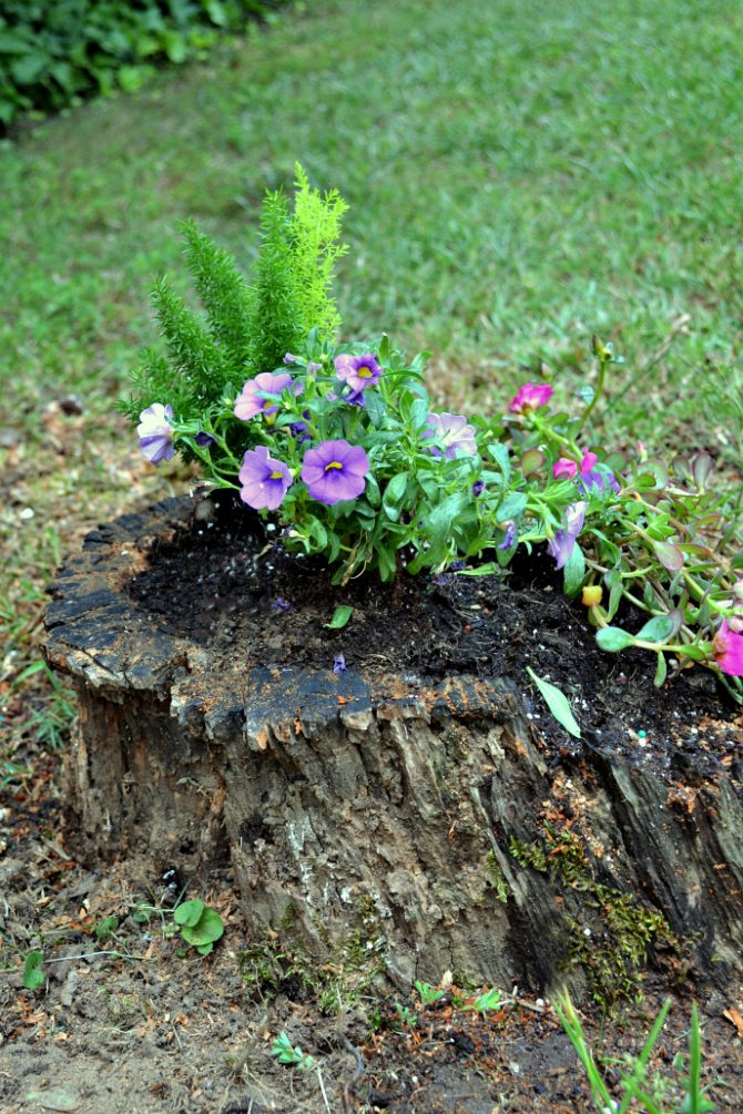 side view diy stump planter