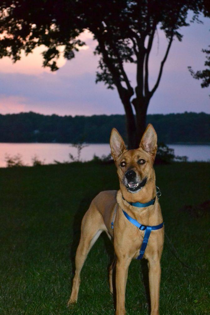 Charlie after sunset