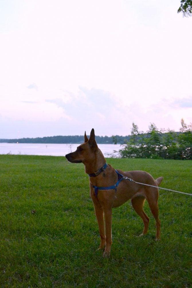 Charlie enjoying Deltaville