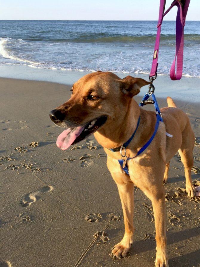 Charlie exploring the beach