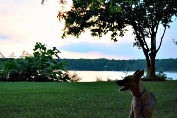 Charlie on leash in Deltaville