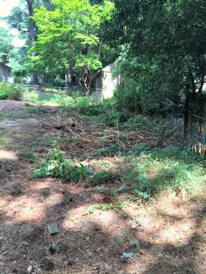 Backyard Sinkhole And Yard Debris Pit