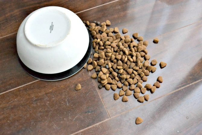 Without a no-slip dog feeder, the dog bowl ended up flipped over on the floor in a big mess.
