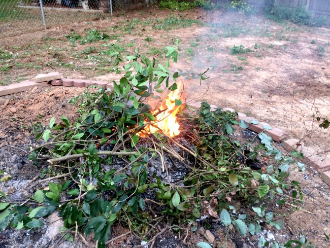 temporary fire pit to burn brush