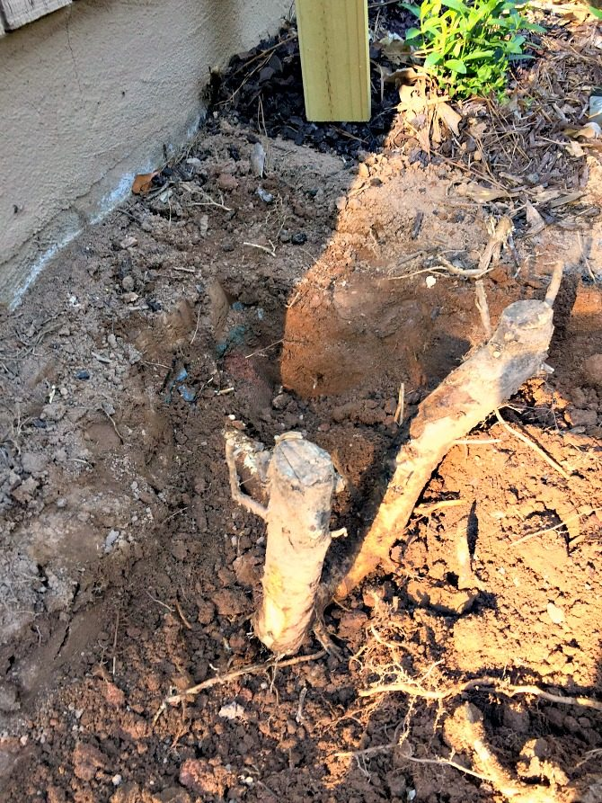 digging-out-tree-roots