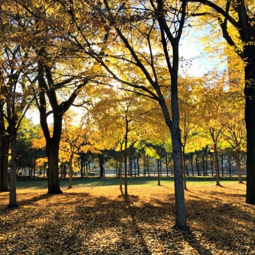 chicago-in-the-fall