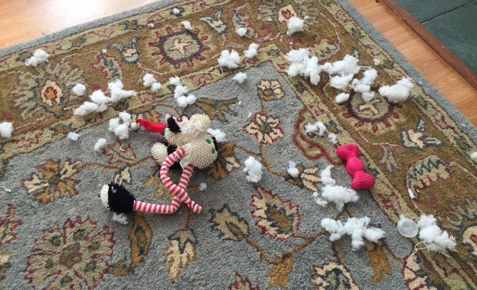 Charlie destroying stuffed toys