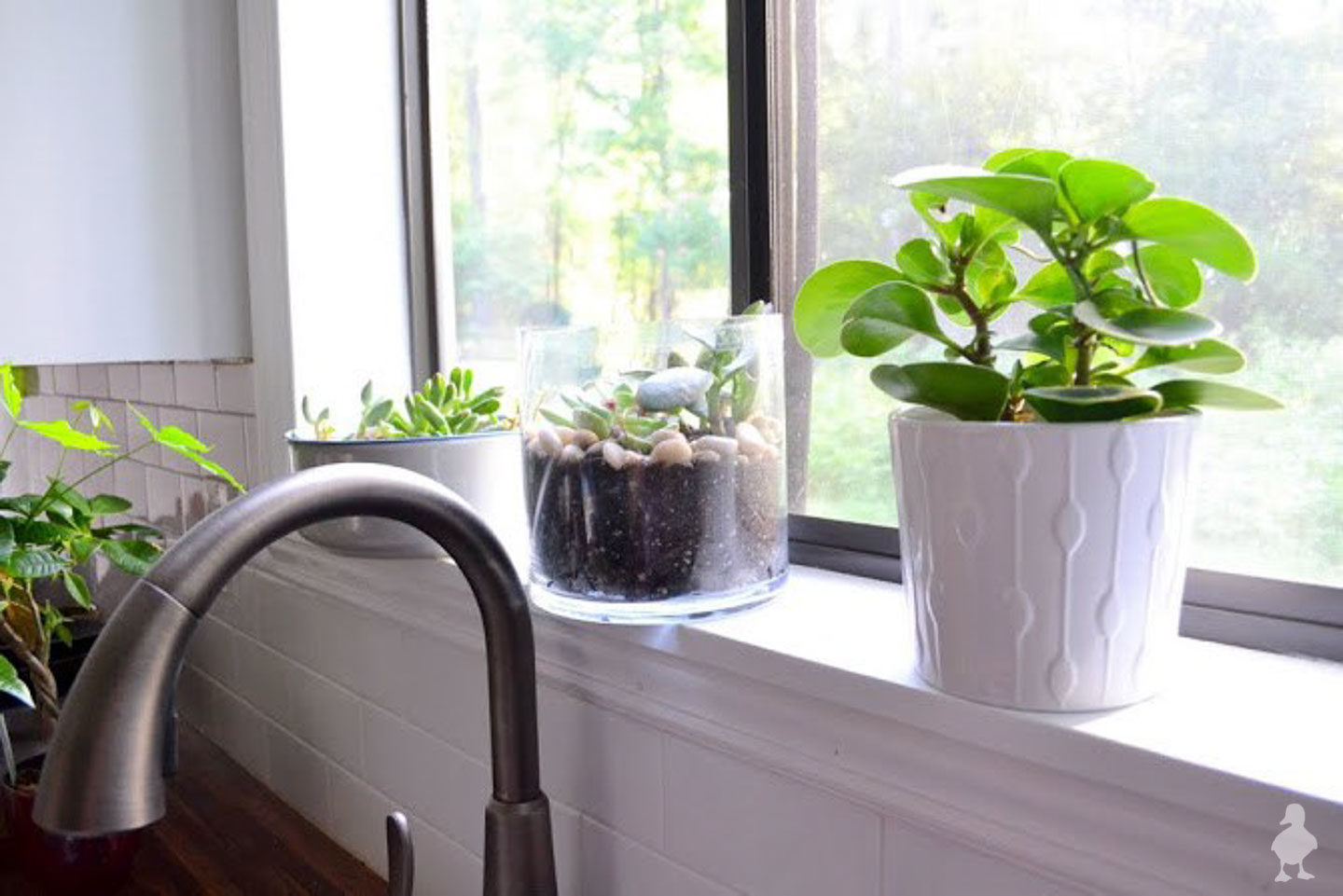 plants and succulents along kitchen sink