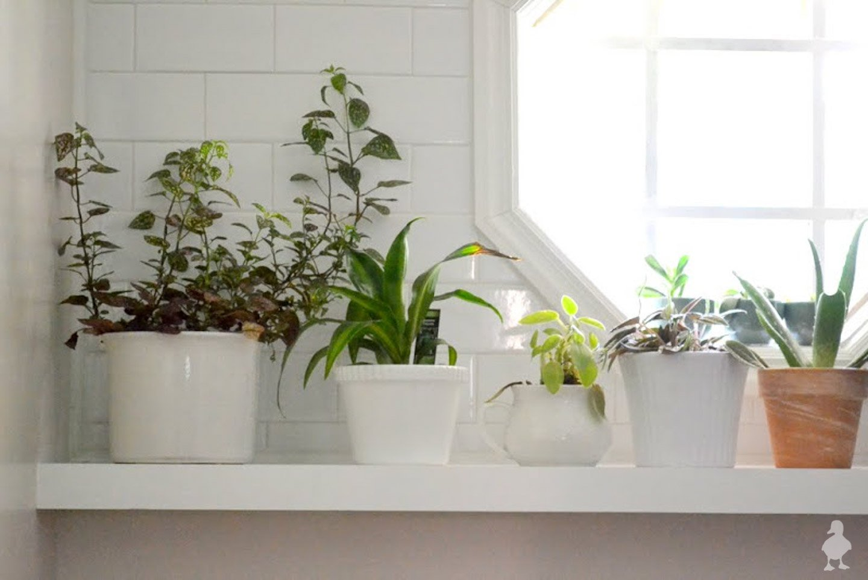 plants on laundry room shelf