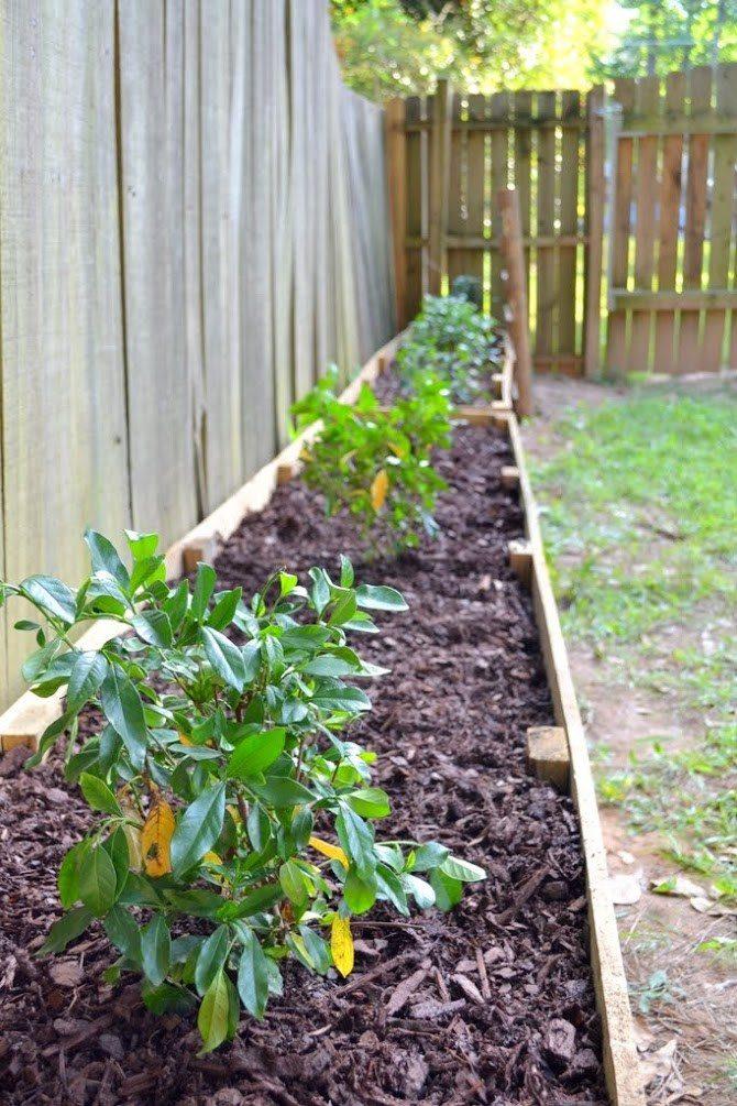 diy raised garden beds with gardenias