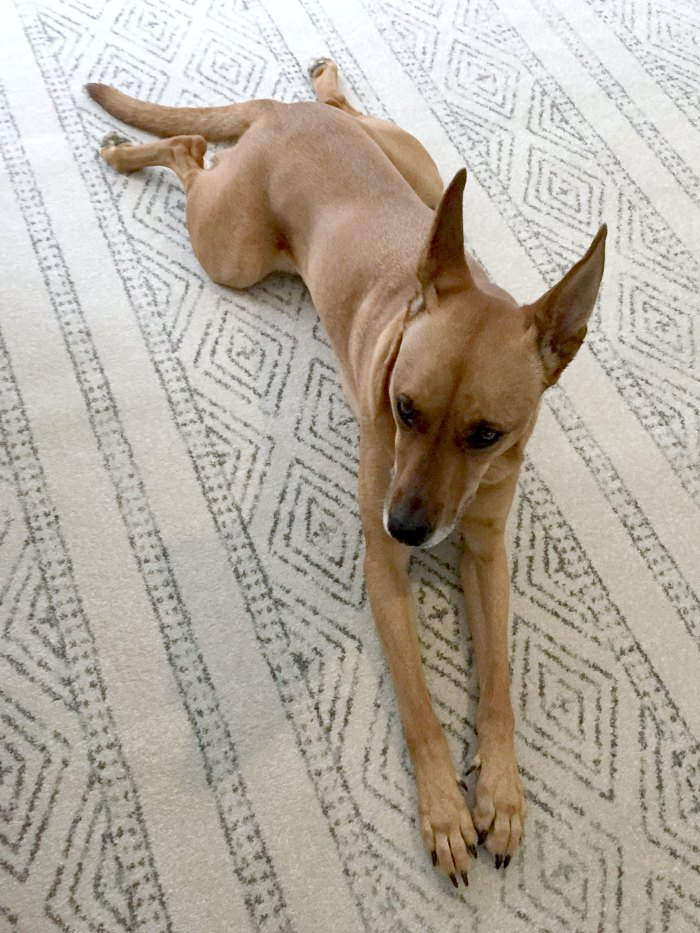 Charlie modeling the new block print rug