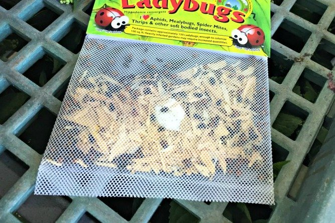 bag of ladybugs