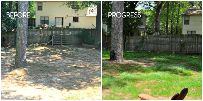 before and progress on the back yard