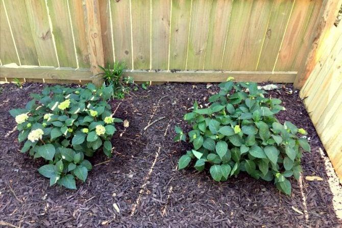 beginning the corner garden