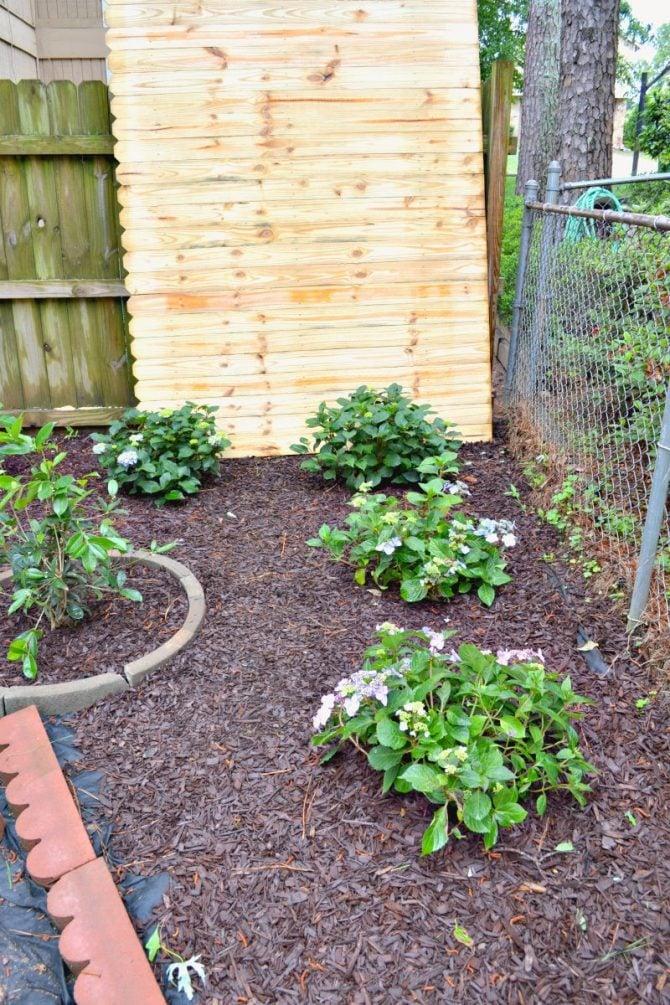 bloomstruck hydrangea corner garden