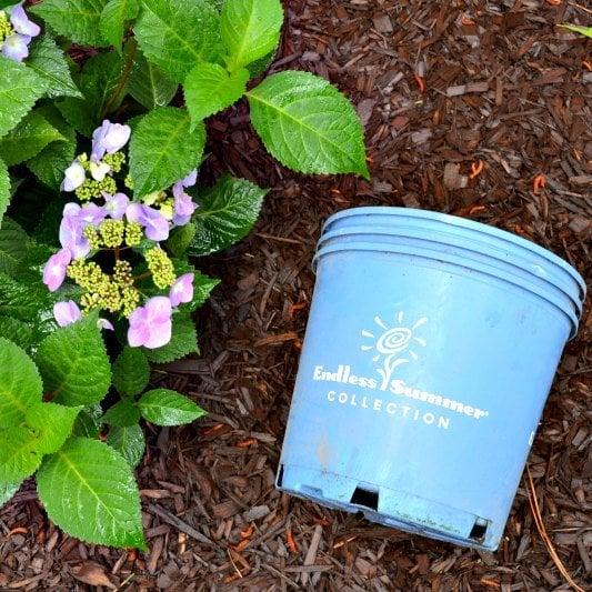 My New Hydrangea Corner Garden